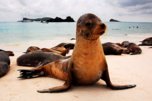 Galapagos avec Love2Travel